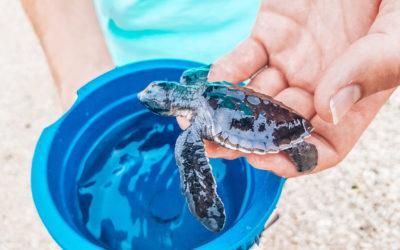 Bali: Schildkröten Auffangstation Serangan
