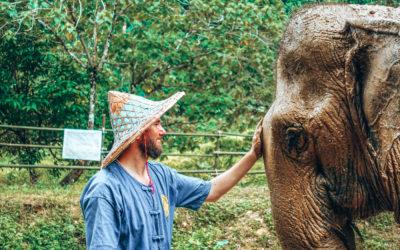 Elephant Care Park in Pang-Nga