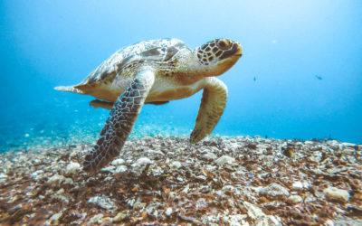 Gili Air – Relaxen mit Schildkröten